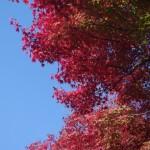 10月(神無月)の時候の挨拶(フォーマル・カジュアル)と手紙の書き出しの例と書き方
