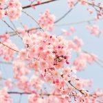 4月(卯月)の時候の挨拶(フォーマル・カジュアル)と手紙の書き出しの例と書き方