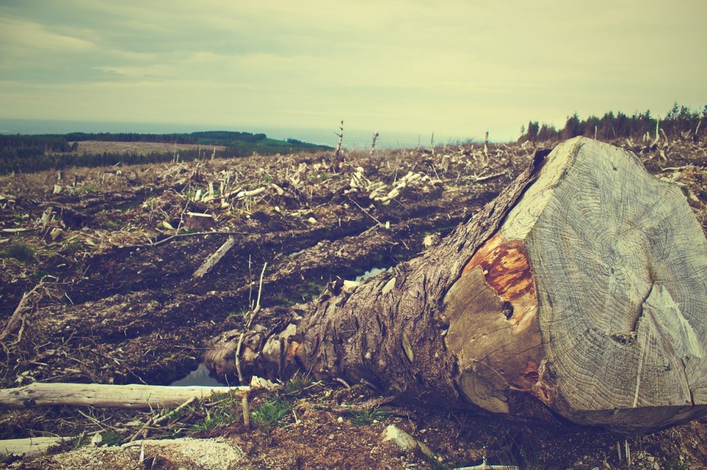 deforestation-405749_1280